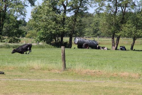 Rauchhaus Blick auf Kühe von Mahlstedt